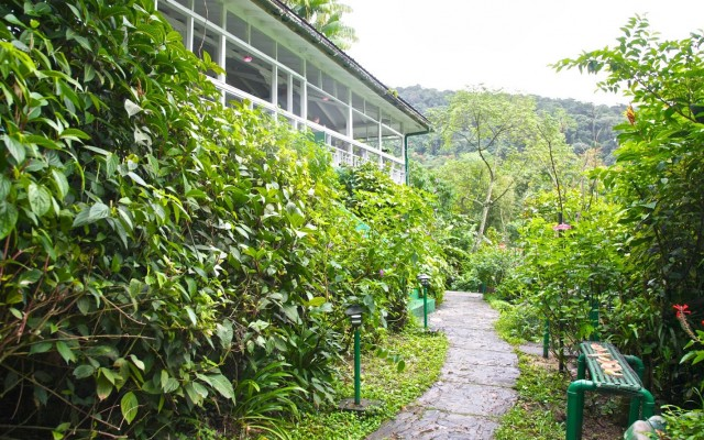 Asa Wright Nature Centre, Trinidad, Trinidad and Tobago, Caligo Ventures