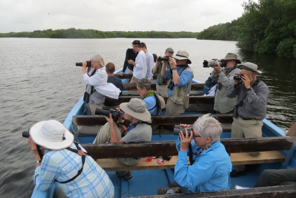 Caroni Swamp Tour, Scarlet Ibis, Trinidad and Tobago, Trinidad Birding Tour, Caligo Ventures